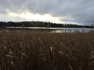 Vakkert på Brønnøya!